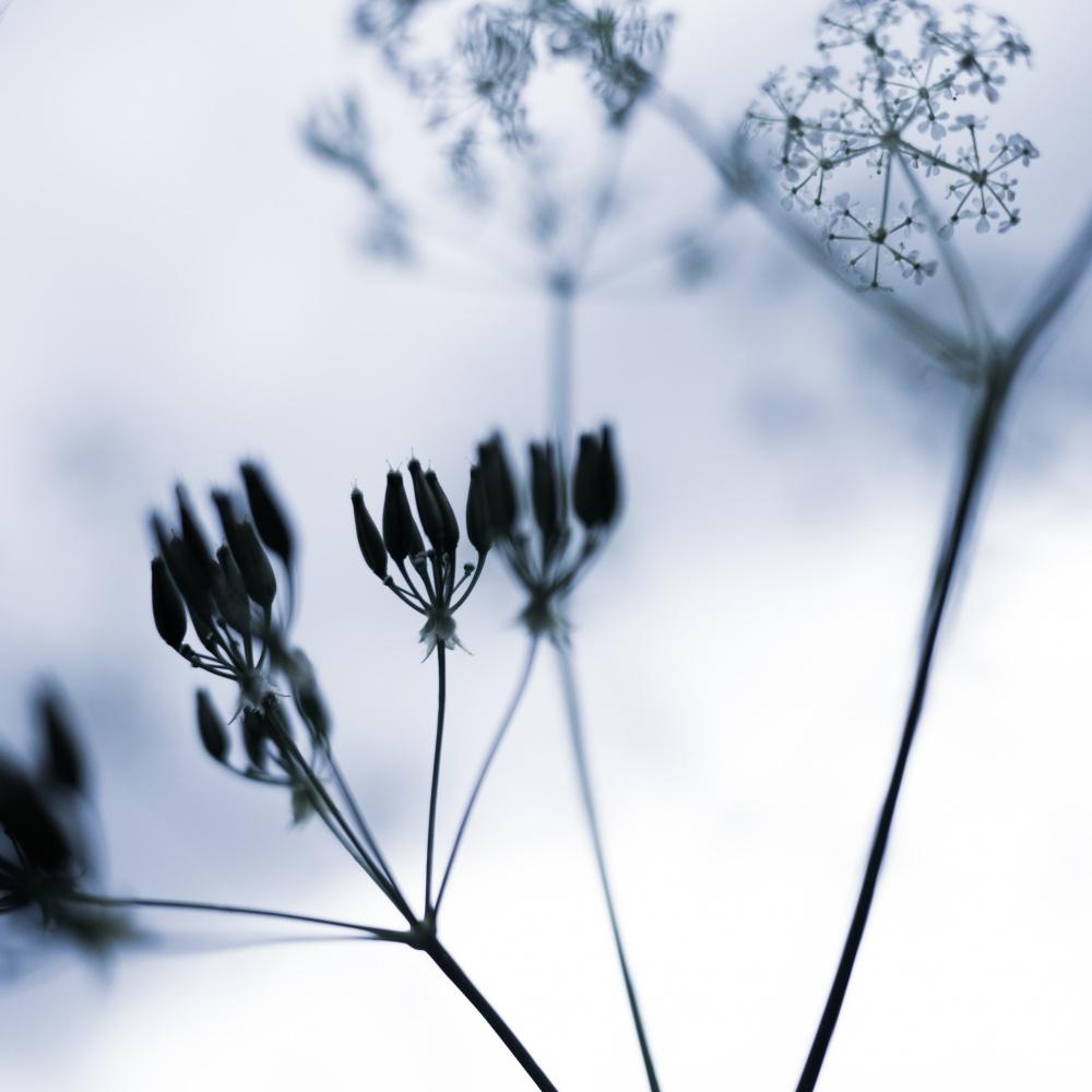 Fleurs - lignes